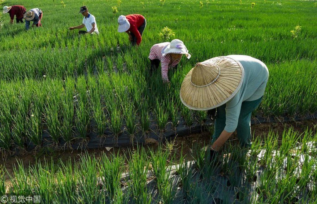 China Farm